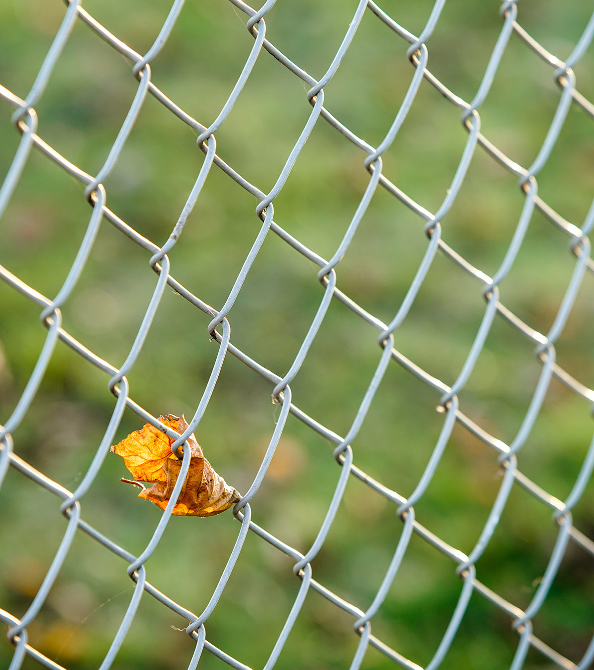 Chain Link Faq From Your Fence Contractor Wellington